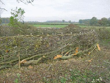Hedging round the first of the two corners