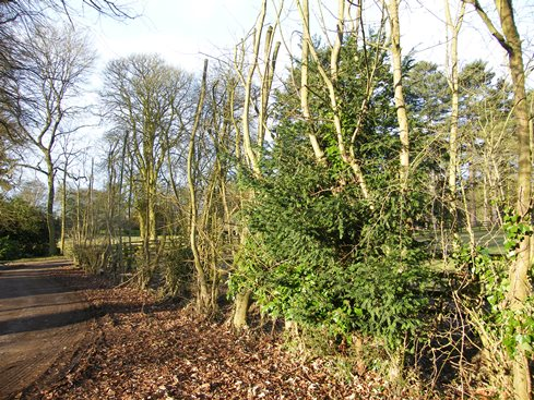 Before view from other end - the evergreen in the              hedge is yew - most unusual to find this as it is              poisonous to stock