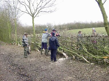 Binding the hedge