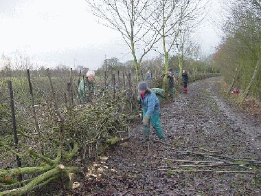 Tidying the hedge and finishing the binding on the last afternoon