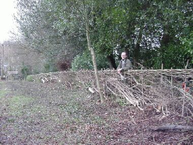 Eventually I was persuaded to pose by the almost completed hedge!