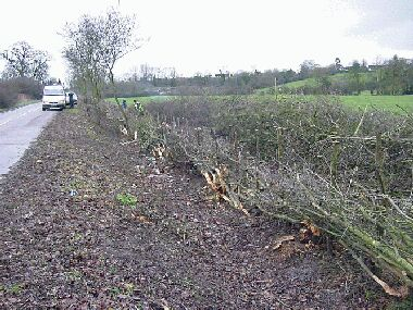 This is the hedge on the left after laying