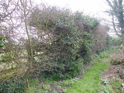 Far end of hedge before....