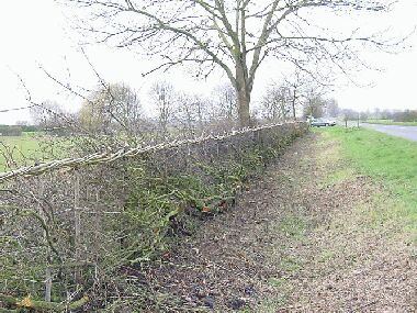 View back along last section of hedge
