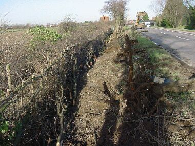 Laying completed.  Large elder stumps laying on the verge have been pulled out by JCB.