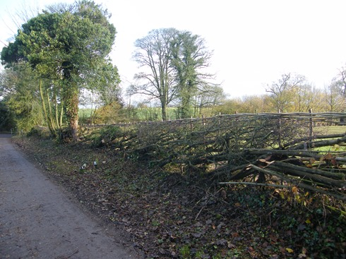 General              view of completed hedge