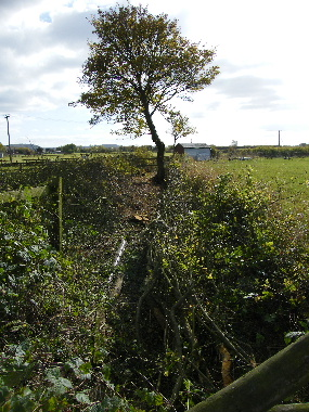 Same view of completed hedge