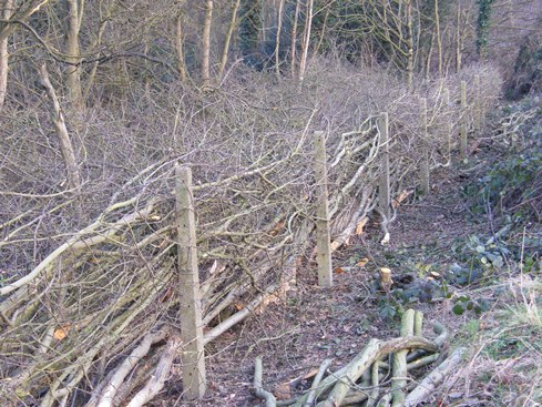 Tall concrete posts at              front and live stakes at back give a more substantial              hedge than possible with stakes and binders