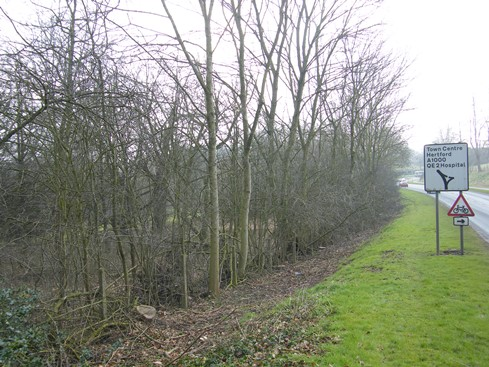 Before view from far end of hedge.