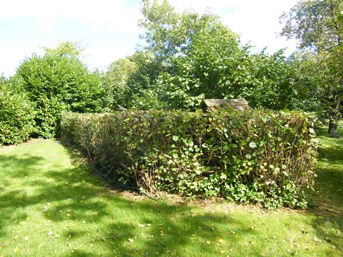 General view of hedge laid in 2004