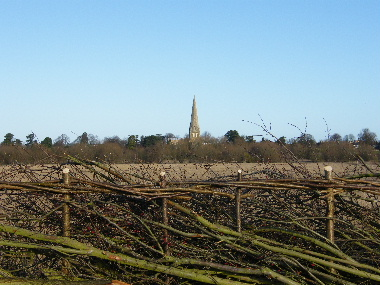 View of St Peter's Church over top of hedge