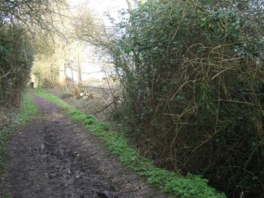 Same view form further back showing change in light levels from laying the hedge