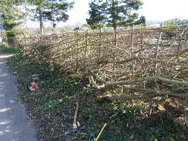 Roadside view of finished hedge