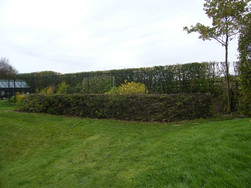 First section              of hedge before...