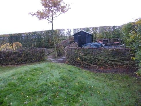 Corner of              garden after