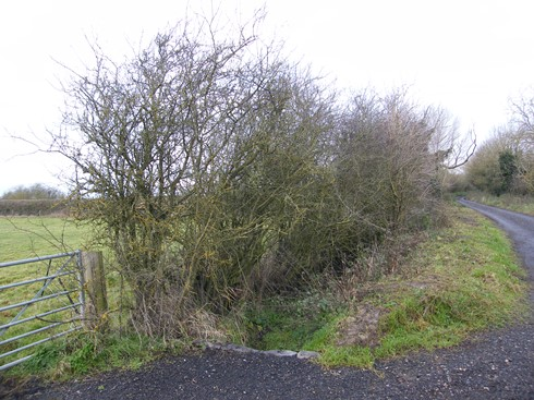 Short final              section of hedge by second gate after