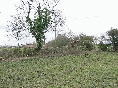 General view showing retained ash and pollarded willow