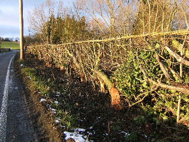 Close up of completd hedge