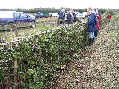 Welsh hedge with vertical stakes and binders