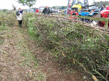 Completed hedge from track being assessed by judges