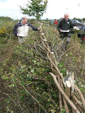 The judges do their job.  My hedge won third prize in the South of England intermediate class