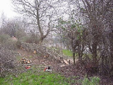 Nursery Road hedge during laying