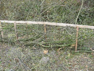 Yorkshire hedge.  You can just see two extra vertical sticks inserted for added strength and tidiness