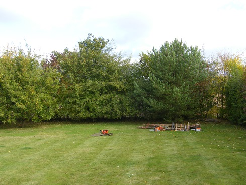 General view              before, conifer on right, oak on left