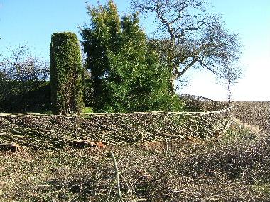 Bottom corner of hedge