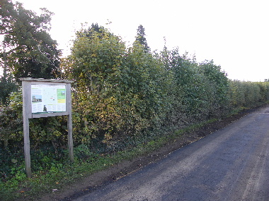 Initial view of hedge from Church end