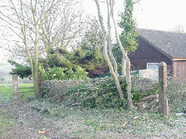 Completed South of                England hedge