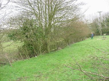 Same hedge as picture on left looking from other direction