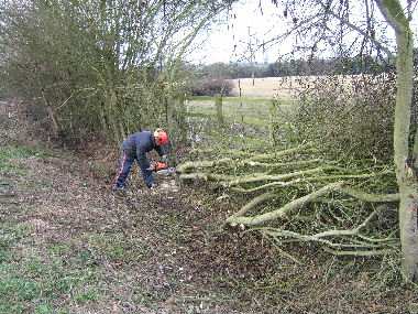 Client gets stuck into hedge with chainsaw