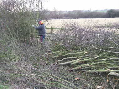 Client untangling bramble and blackthorn