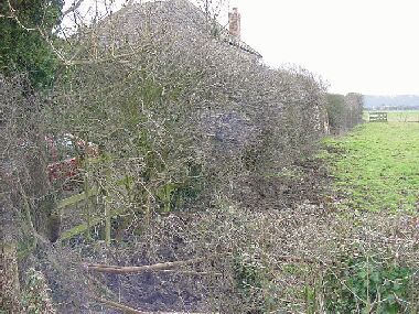 General view of front hedge before laying