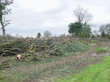 Essentially the same view as left, after laying, with plenty of piles of logs cut from the hedge